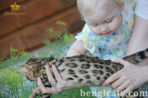 baby and bengal7